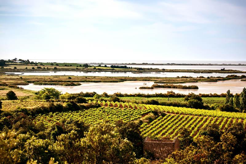 Le muscat, l'histoire du Languedoc, le bio: les Clos de Miège  au rendez-vous de France Bleu Hérault