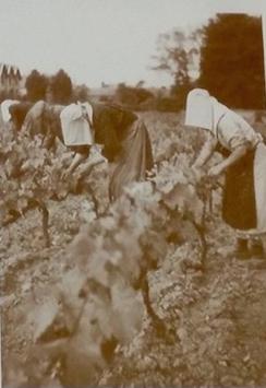Femmes du vin, les grandes absentes de l'histoire