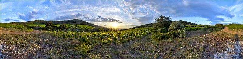 Le muscat à Frontignan, un vignoble qui ne veut pas mourir