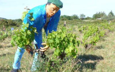 Art, vin et patrimoine, comme un dialogue aux Clos de Miège