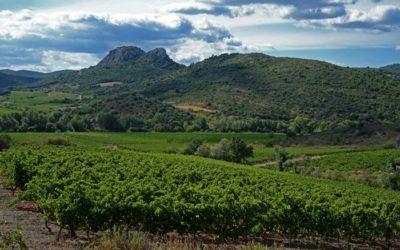 Dossier les vins bio en 2018: 2/ Le grand bond en avant