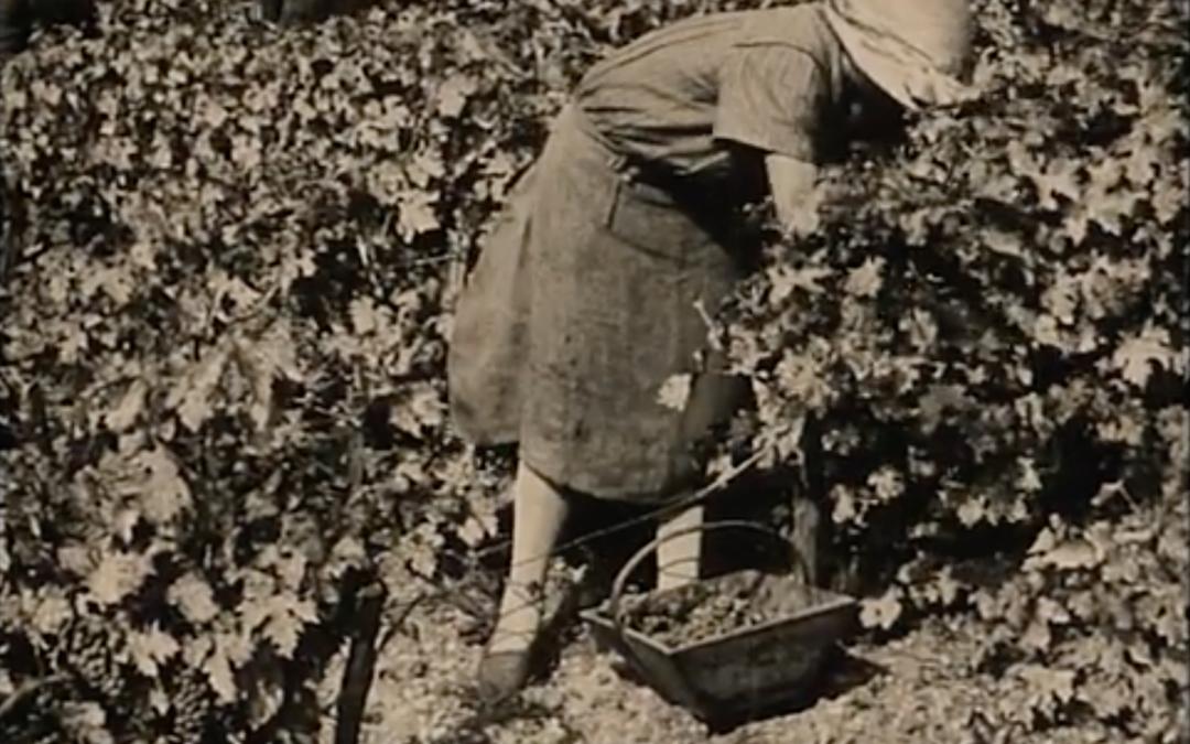 Des femmes actrices du vin