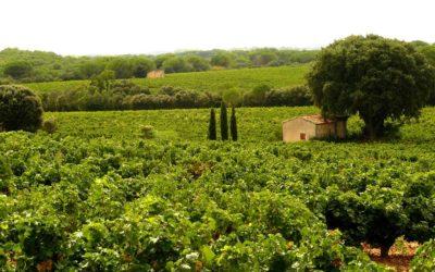 De nouveaux territoires du vin, ricochet dans le temps passé ?