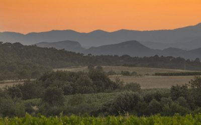 Un « juste » chemin viticole en Cévennes