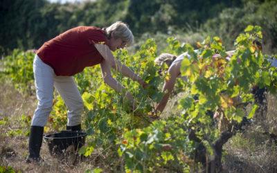 Retour au plus près d'une culture du vin