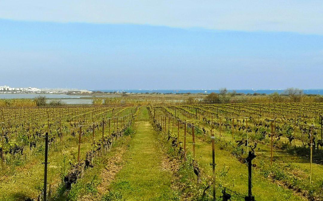 Vigne et eau, une approche interdisciplinaire avec Watnowa